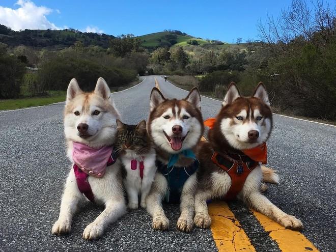Добрая история: три собаки приютили котенка и они стали лучшими друзьями