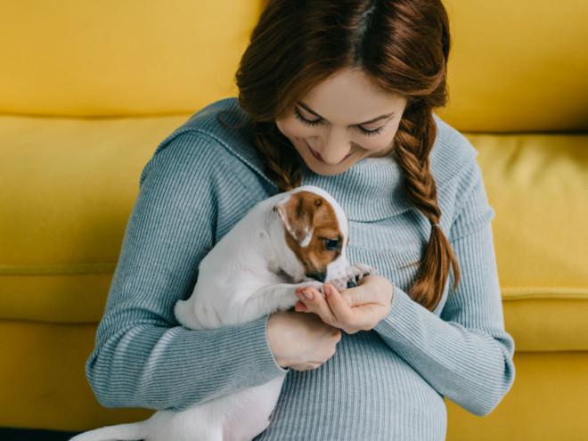 Новое исследование: собаки могут заразить своих беременных хозяек