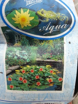 Мой опыт выращивания кувшинки)