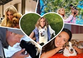 Мохнатые и хвостатые: любимые собаки знаменитостей
