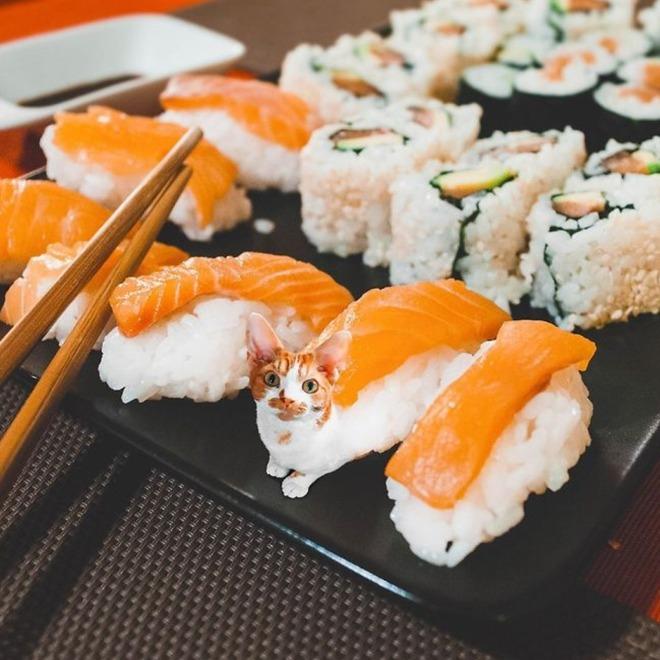 Картинки роллов и суши прикол, свадьбу тети