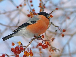 Поддержим птиц зимой